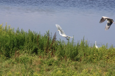 Img_9417a