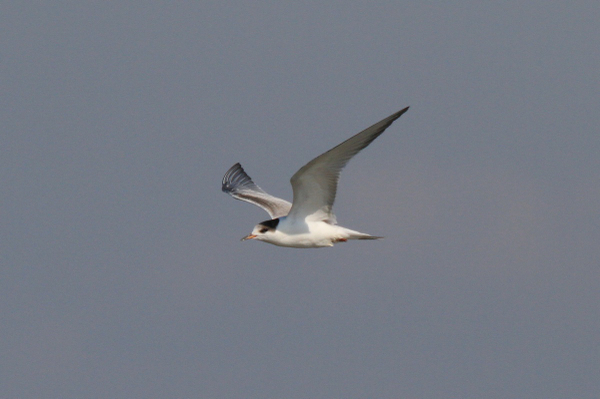 Img_7069a